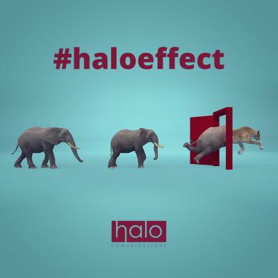 halo-effect
